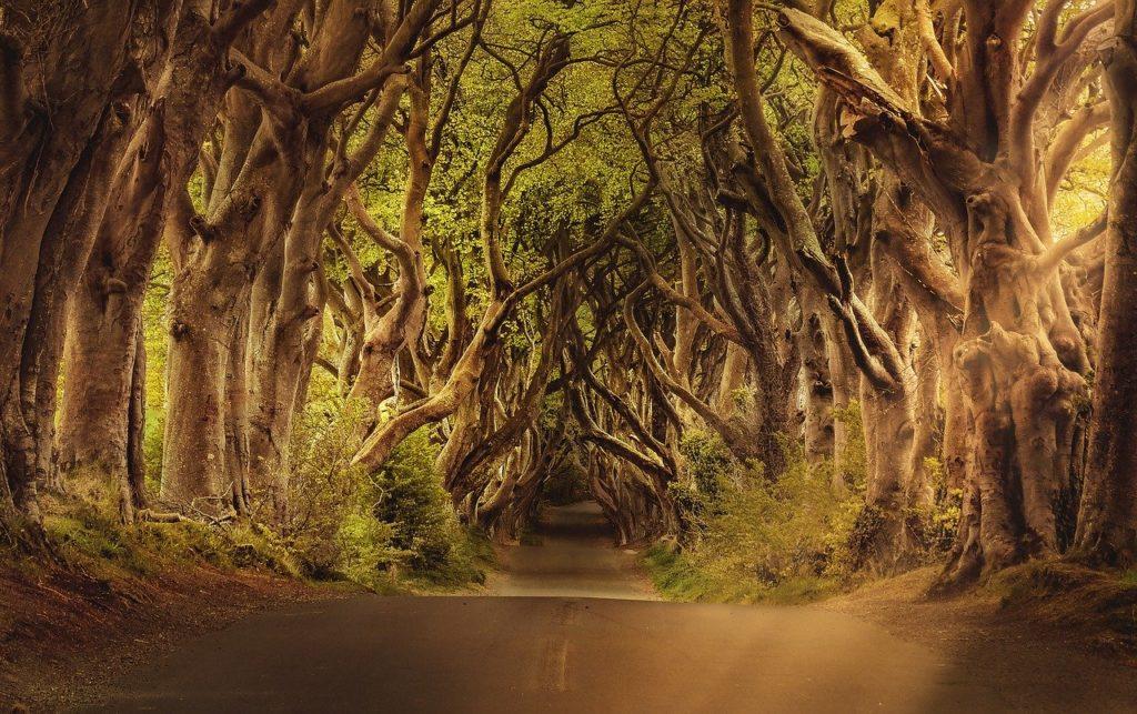 כביש ביער אירלנדי